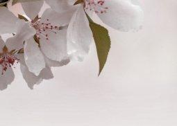 Декор Береза-керамика Азалия Сакура 4 бордовый 25x35